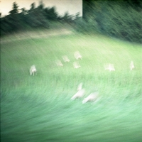 Moutons, Jeanne Fredac © Adagp, Paris, 2021