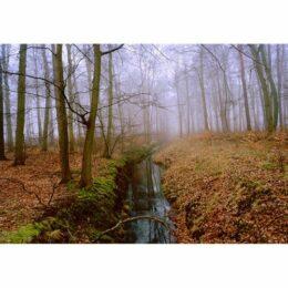 Deutschland im Herbst © Jeanne Fredac