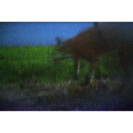 Fuchs © Jeanne Fredac