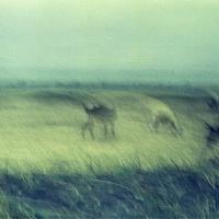 Kühe, Jeanne Fredac © Adagp, Paris, 2021