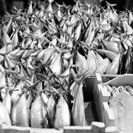 Caisse de poissons, Jeanne Fredac © Adagp, Paris, 2021