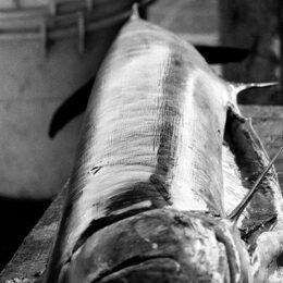 Thunfisch, Jeanne Fredac © Adagp, Paris, 2021